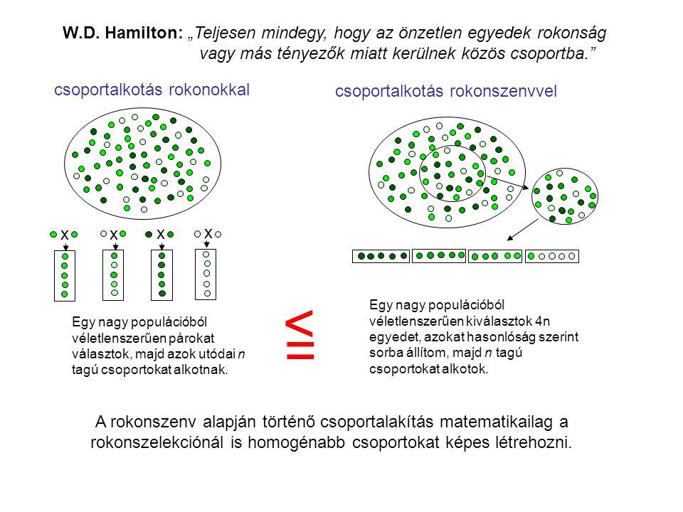 """A rokonszenv alapján történő csoportalakítás matematikailag a rokonszelekciónál is homogénabb csoportokat képes létrehozni. W.D. Hamilton: """"Teljesen m"""