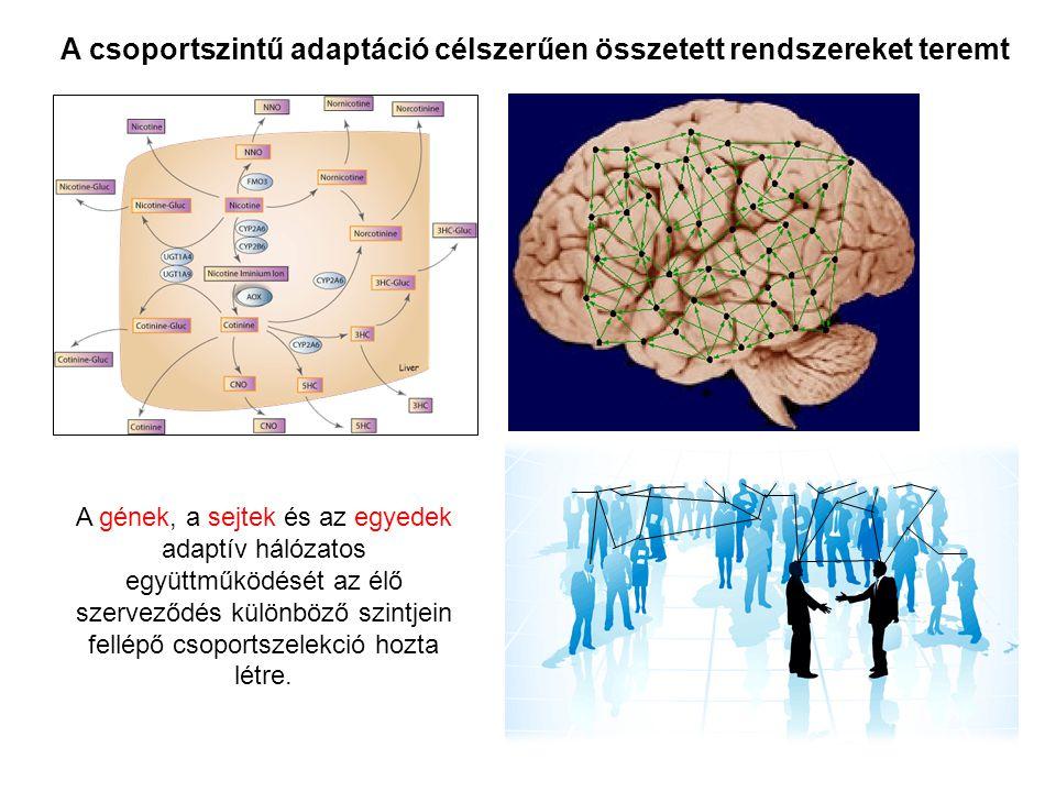 A csoportszintű adaptáció célszerűen összetett rendszereket teremt A gének, a sejtek és az egyedek adaptív hálózatos együttműködését az élő szerveződé
