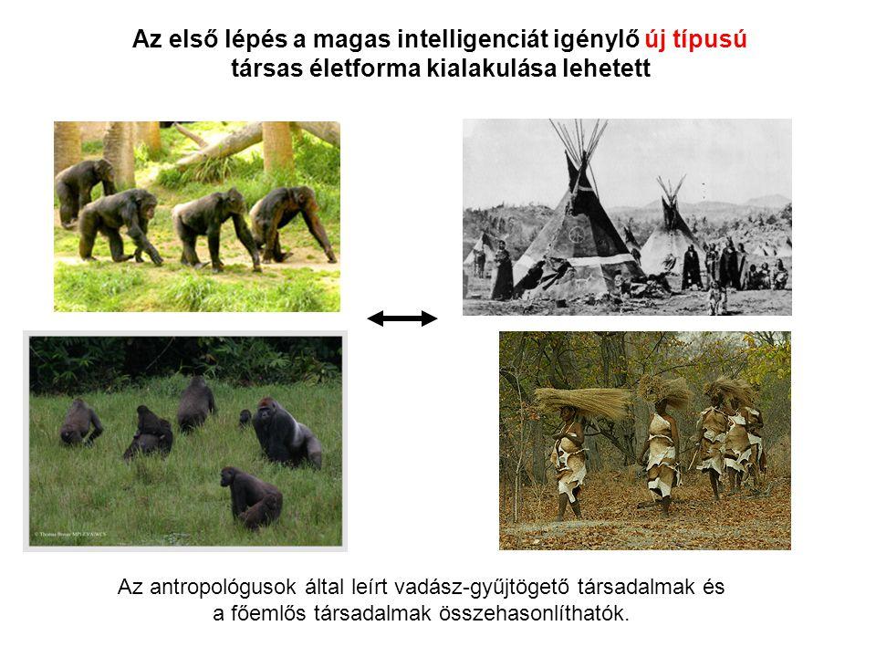 Az első lépés a magas intelligenciát igénylő új típusú társas életforma kialakulása lehetett Az antropológusok által leírt vadász-gyűjtögető társadalm