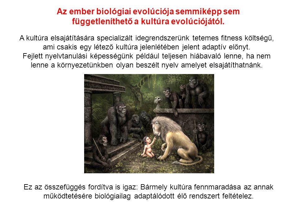 Az ember biológiai evolúciója semmiképp sem függetleníthető a kultúra evolúciójától. A kultúra elsajátítására specializált idegrendszerünk tetemes fit
