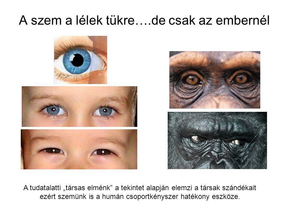 """A szem a lélek tükre….de csak az embernél A tudatalatti """"társas elménk"""" a tekintet alapján elemzi a társak szándékait ezért szemünk is a humán csoport"""