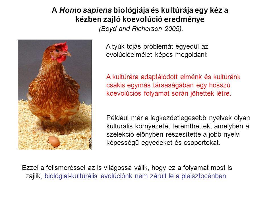 Más főemlősök is képesek szimbólikus gondolkodásra …..De nem maguktól.