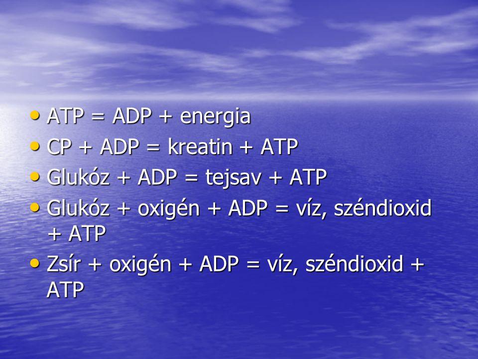 ATP = ADP + energia ATP = ADP + energia CP + ADP = kreatin + ATP CP + ADP = kreatin + ATP Glukóz + ADP = tejsav + ATP Glukóz + ADP = tejsav + ATP Gluk