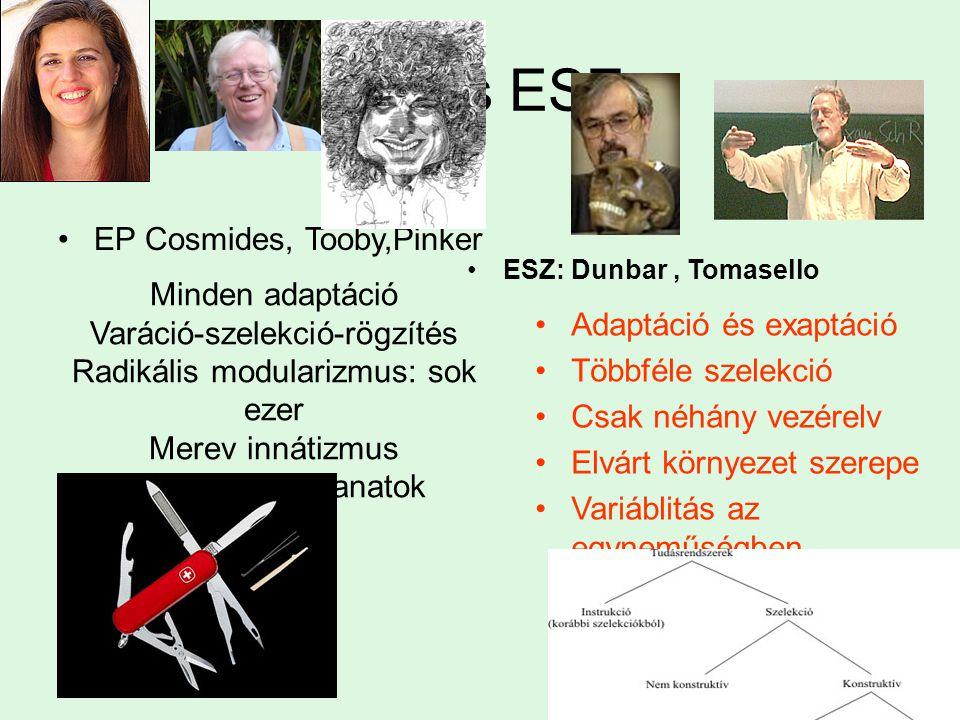 EP és ESZ EP Cosmides, Tooby,Pinker ESZ: Dunbar, Tomasello Minden adaptáció Varáció-szelekció-rögzítés Radikális modularizmus: sok ezer Merev innátizmus Repetitív mozzanatok Adaptáció és exaptáció Többféle szelekció Csak néhány vezérelv Elvárt környezet szerepe Variáblitás az egyneműségben