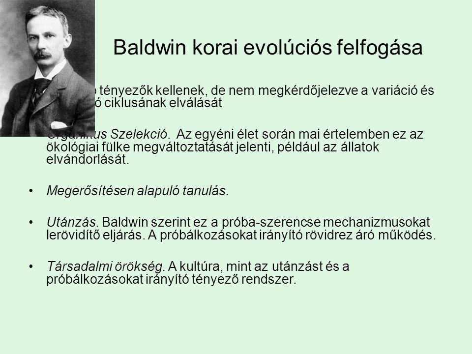 Baldwin korai evolúciós felfogása Gyorsító tényezők kellenek, de nem megkérdőjelezve a variáció és szelekció ciklusának elválását Organikus Szelekció.