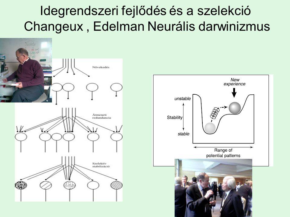 Idegrendszeri fejlődés és a szelekció Changeux, Edelman Neurális darwinizmus