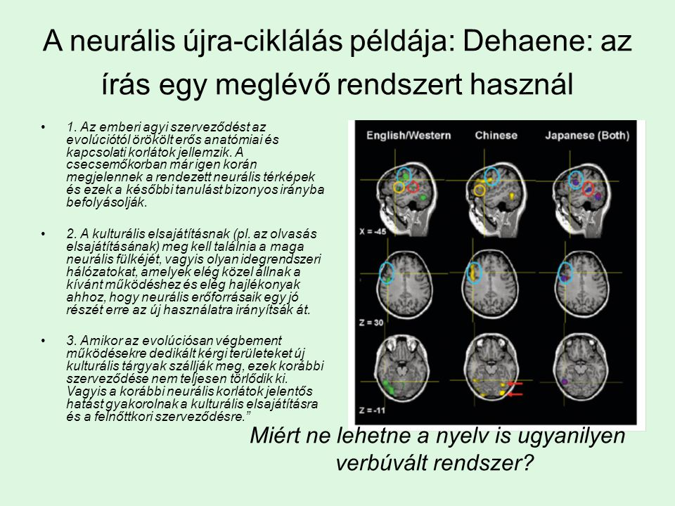 A neurális újra-ciklálás példája: Dehaene: az írás egy meglévő rendszert használ 1. Az emberi agyi szerveződést az evolúciótól örökölt erős anatómiai