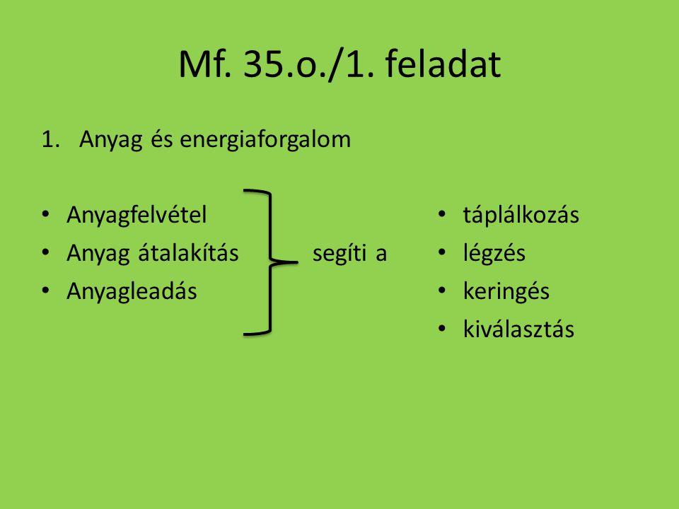Mf. 35.o./1. feladat 1.Anyag és energiaforgalom Anyagfelvétel Anyag átalakítássegíti a Anyagleadás táplálkozás légzés keringés kiválasztás