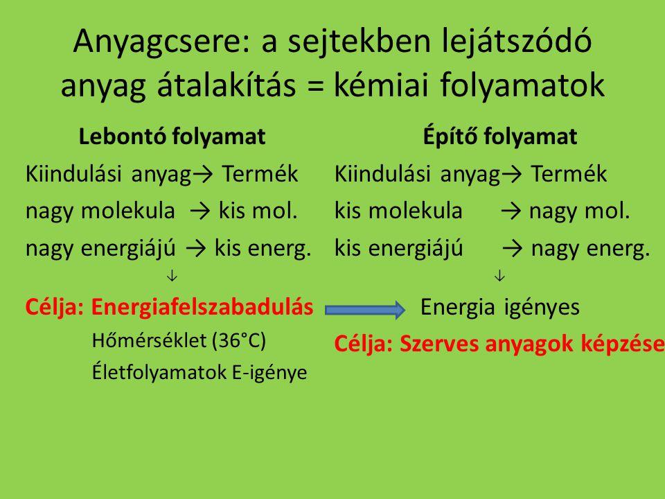 Anyagcsere: a sejtekben lejátszódó anyag átalakítás = kémiai folyamatok Lebontó folyamat Kiindulási anyag→ Termék nagy molekula → kis mol. nagy energi