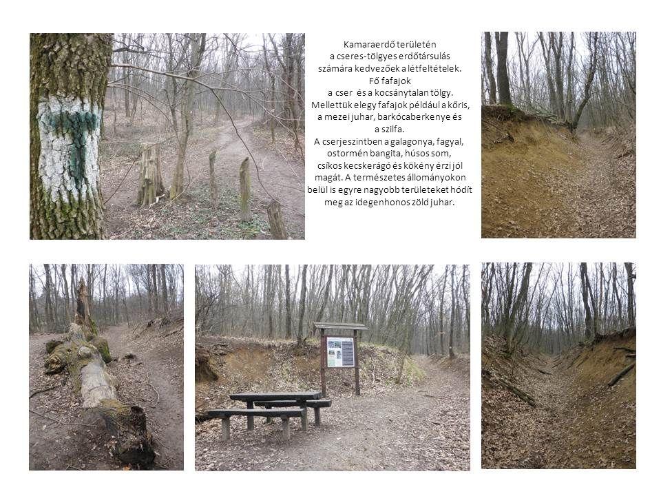 A Kamaraerdő budapesti viszonylatban az egyik legjelentősebb egybefüggő erdőterület, melynek kezelője, fenntartója a Pilisi Parkerdő Zrt. Erdő jellegé