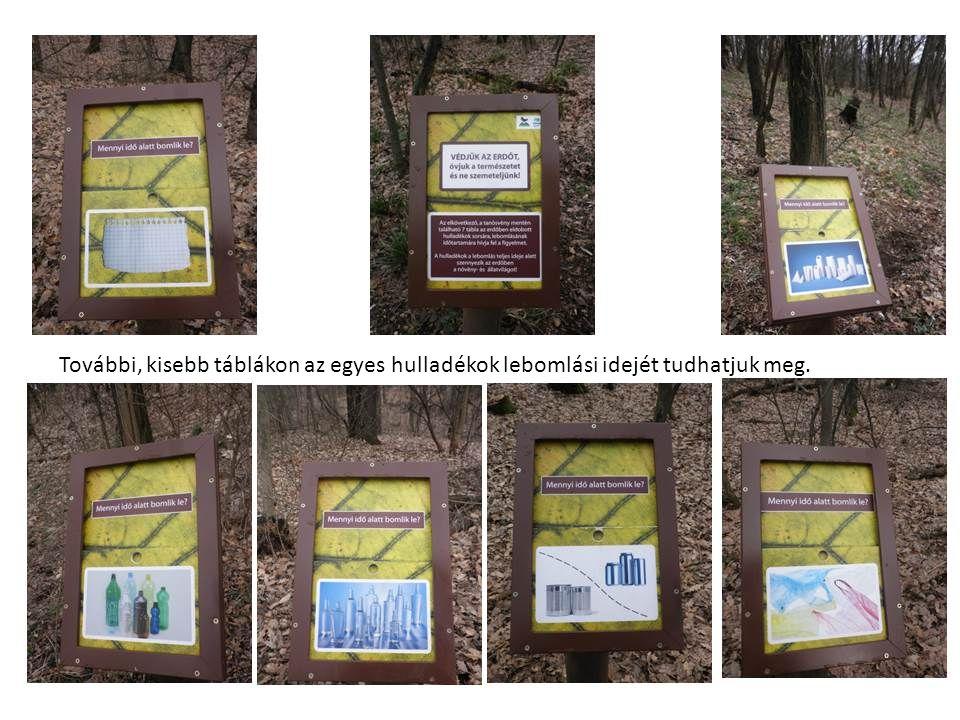 Megismerkedhetünk például az erdei fák kérgével, táplálékláncokat alakíthatunk ki, erdei állatok nyomait fedezhetjük fel, vagy megnézhetjük, mekkorák