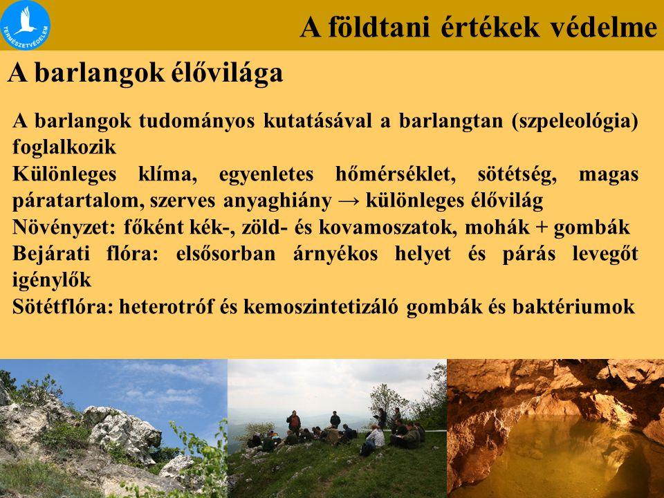A barlangok élővilága A barlangok tudományos kutatásával a barlangtan (szpeleológia) foglalkozik Különleges klíma, egyenletes hőmérséklet, sötétség, m