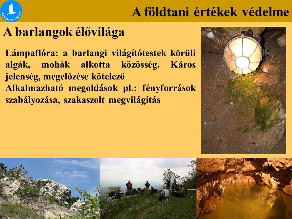 A földtani értékek védelme A barlangok élővilága Lámpaflóra: a barlangi világítótestek körüli algák, mohák alkotta közösség. Káros jelenség, megelőzés