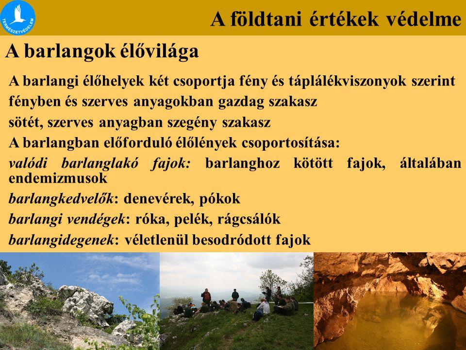 A földtani értékek védelme A barlangok élővilága A barlangi élőhelyek két csoportja fény és táplálékviszonyok szerint fényben és szerves anyagokban ga