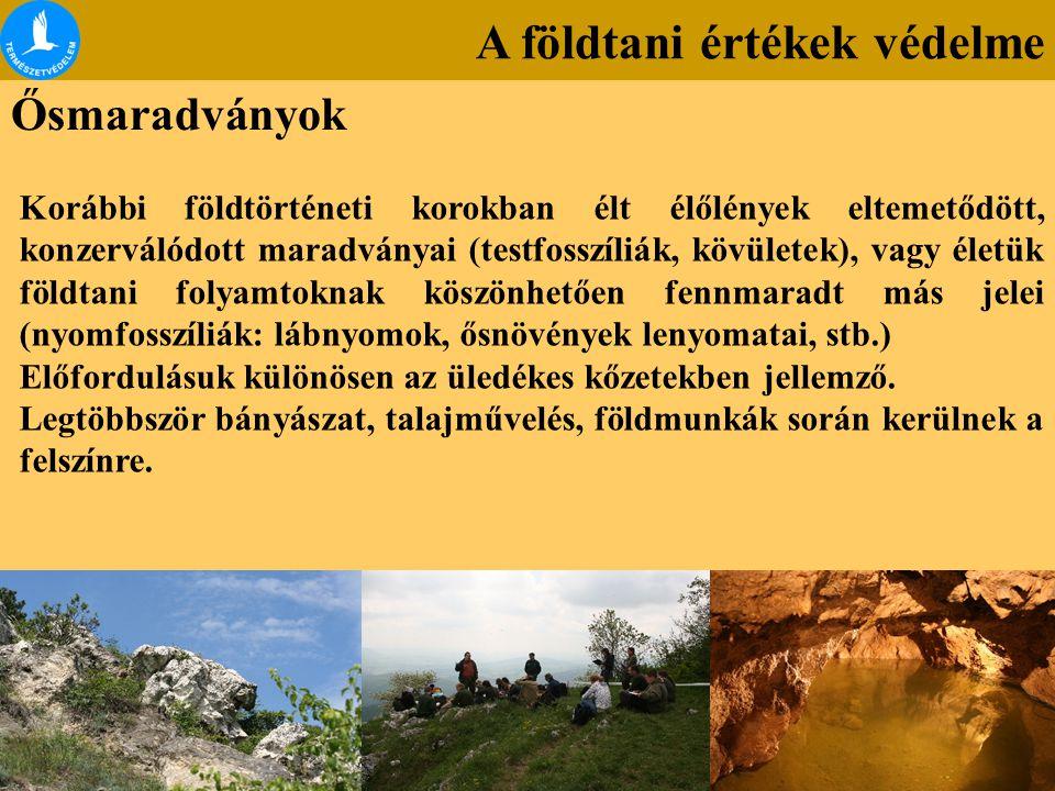 A földtani értékek védelme Ősmaradványok Korábbi földtörténeti korokban élt élőlények eltemetődött, konzerválódott maradványai (testfosszíliák, kövüle