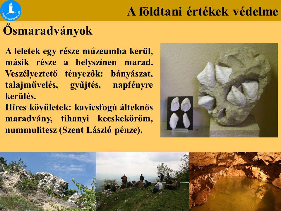 A földtani értékek védelme Ősmaradványok A leletek egy része múzeumba kerül, másik része a helyszínen marad. Veszélyeztető tényezők: bányászat, talajm