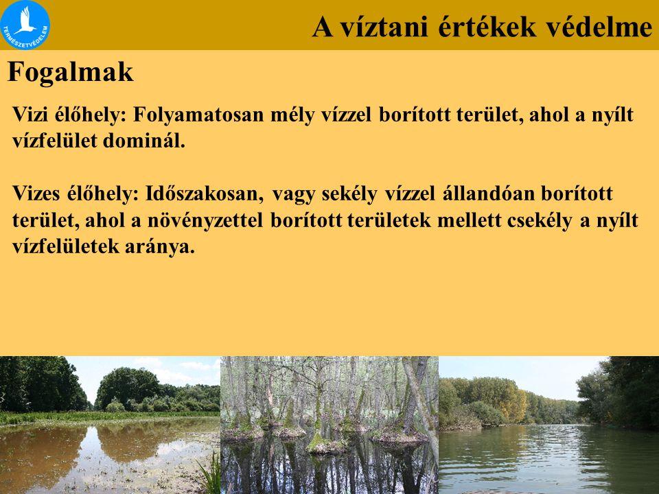 Fogalmak Vizi élőhely: Folyamatosan mély vízzel borított terület, ahol a nyílt vízfelület dominál. Vizes élőhely: Időszakosan, vagy sekély vízzel álla