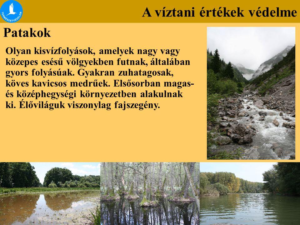 A víztani értékek védelme Patakok Olyan kisvízfolyások, amelyek nagy vagy közepes esésű völgyekben futnak, általában gyors folyásúak. Gyakran zuhatago