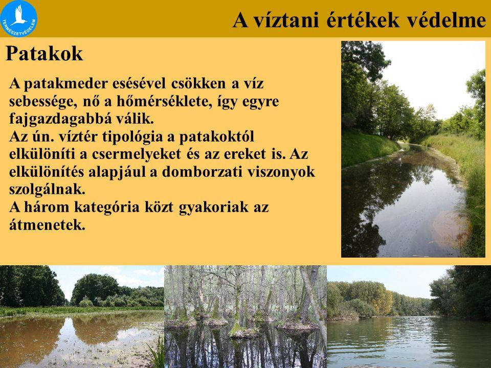 A víztani értékek védelme Patakok A patakmeder esésével csökken a víz sebessége, nő a hőmérséklete, így egyre fajgazdagabbá válik. Az ún. víztér tipol