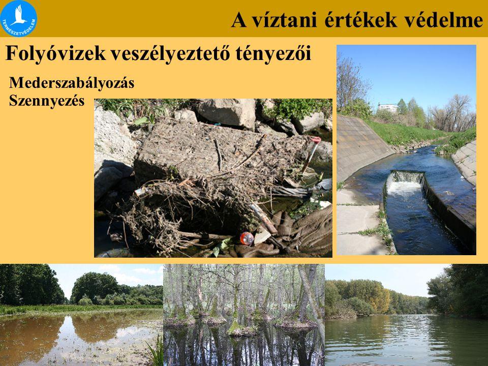A víztani értékek védelme Folyóvizek veszélyeztető tényezői Mederszabályozás Szennyezés