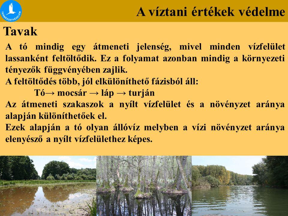 A víztani értékek védelme Tavak A tó mindig egy átmeneti jelenség, mivel minden vízfelület lassanként feltöltődik. Ez a folyamat azonban mindig a körn