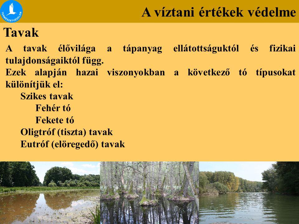 A víztani értékek védelme Tavak A tavak élővilága a tápanyag ellátottságuktól és fizikai tulajdonságaiktól függ. Ezek alapján hazai viszonyokban a köv