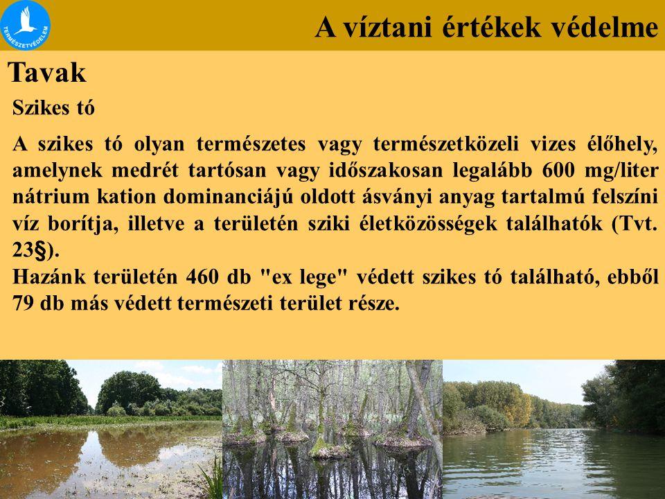 A víztani értékek védelme Tavak Szikes tó A szikes tó olyan természetes vagy természetközeli vizes élőhely, amelynek medrét tartósan vagy időszakosan