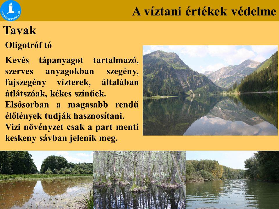 A víztani értékek védelme Tavak Oligotróf tó Kevés tápanyagot tartalmazó, szerves anyagokban szegény, fajszegény vízterek, általában átlátszóak, kékes