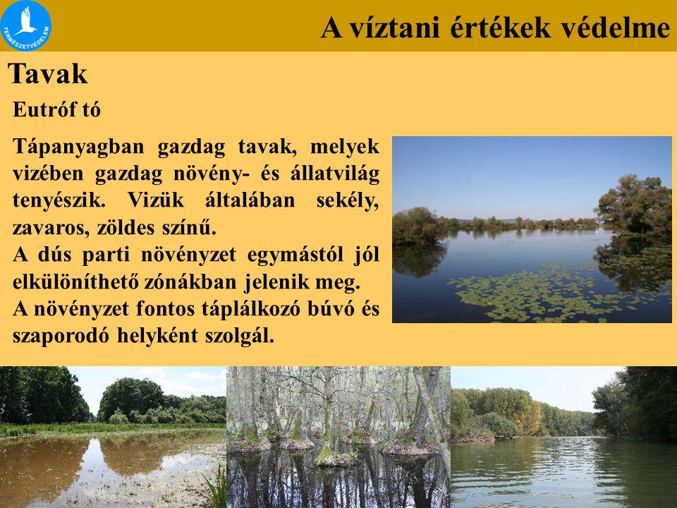 A víztani értékek védelme Tavak Eutróf tó Tápanyagban gazdag tavak, melyek vizében gazdag növény- és állatvilág tenyészik. Vizük általában sekély, zav