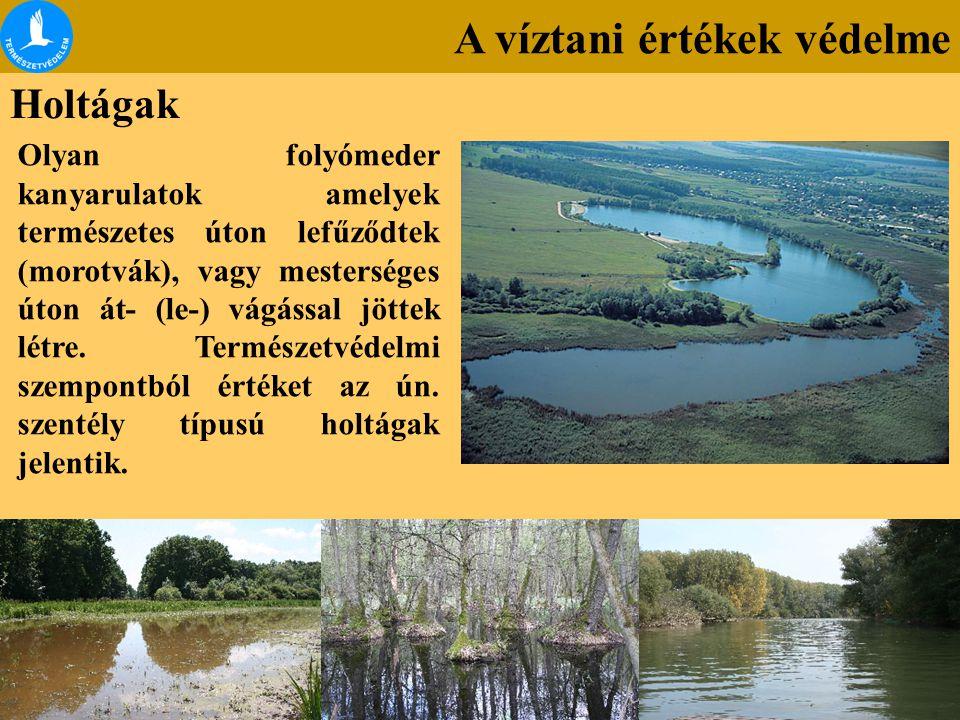 A víztani értékek védelme Holtágak Olyan folyómeder kanyarulatok amelyek természetes úton lefűződtek (morotvák), vagy mesterséges úton át- (le-) vágás