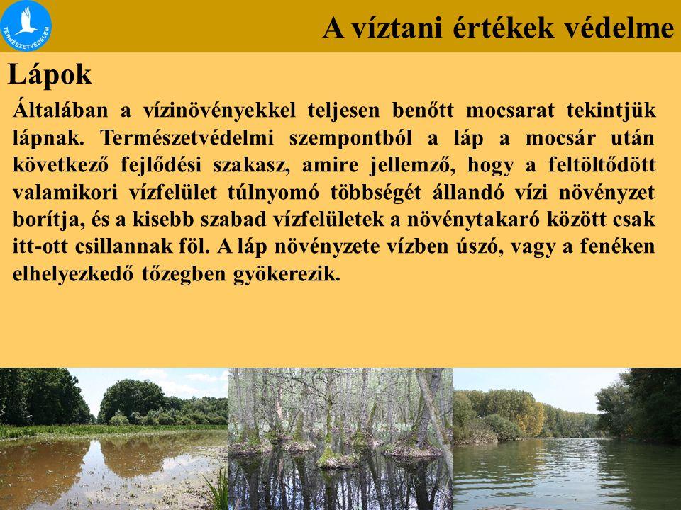 A víztani értékek védelme Lápok Általában a vízinövényekkel teljesen benőtt mocsarat tekintjük lápnak. Természetvédelmi szempontból a láp a mocsár utá