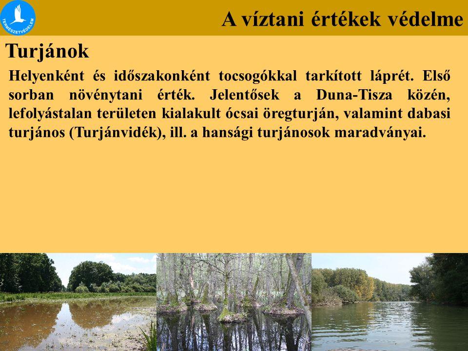 A víztani értékek védelme Turjánok Helyenként és időszakonként tocsogókkal tarkított láprét. Első sorban növénytani érték. Jelentősek a Duna-Tisza köz