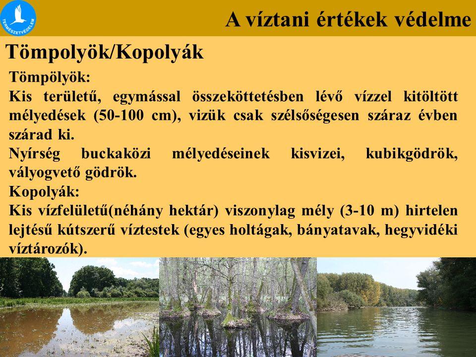 A víztani értékek védelme Tömpolyök/Kopolyák Tömpölyök: Kis területű, egymással összeköttetésben lévő vízzel kitöltött mélyedések (50-100 cm), vizük c