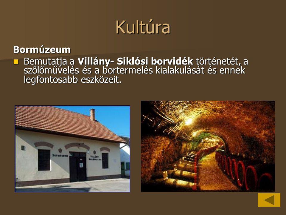 Kultúra Bormúzeum Bemutatja a Villány- Siklósi borvidék történetét, a szőlőművelés és a bortermelés kialakulását és ennek legfontosabb eszközeit. Bemu