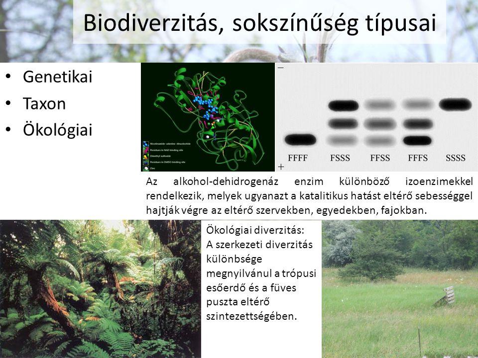 Biodiverzitás, sokszínűség típusai Genetikai Taxon Ökológiai Az alkohol-dehidrogenáz enzim különböző izoenzimekkel rendelkezik, melyek ugyanazt a kata