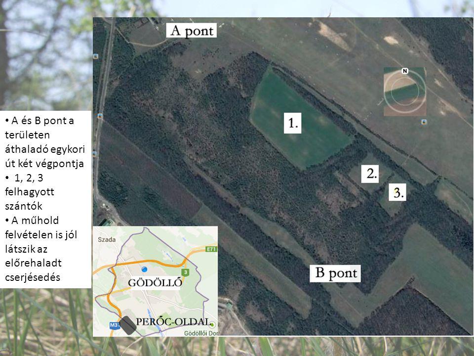 A és B pont a területen áthaladó egykori út két végpontja 1, 2, 3 felhagyott szántók A műhold felvételen is jól látszik az előrehaladt cserjésedés