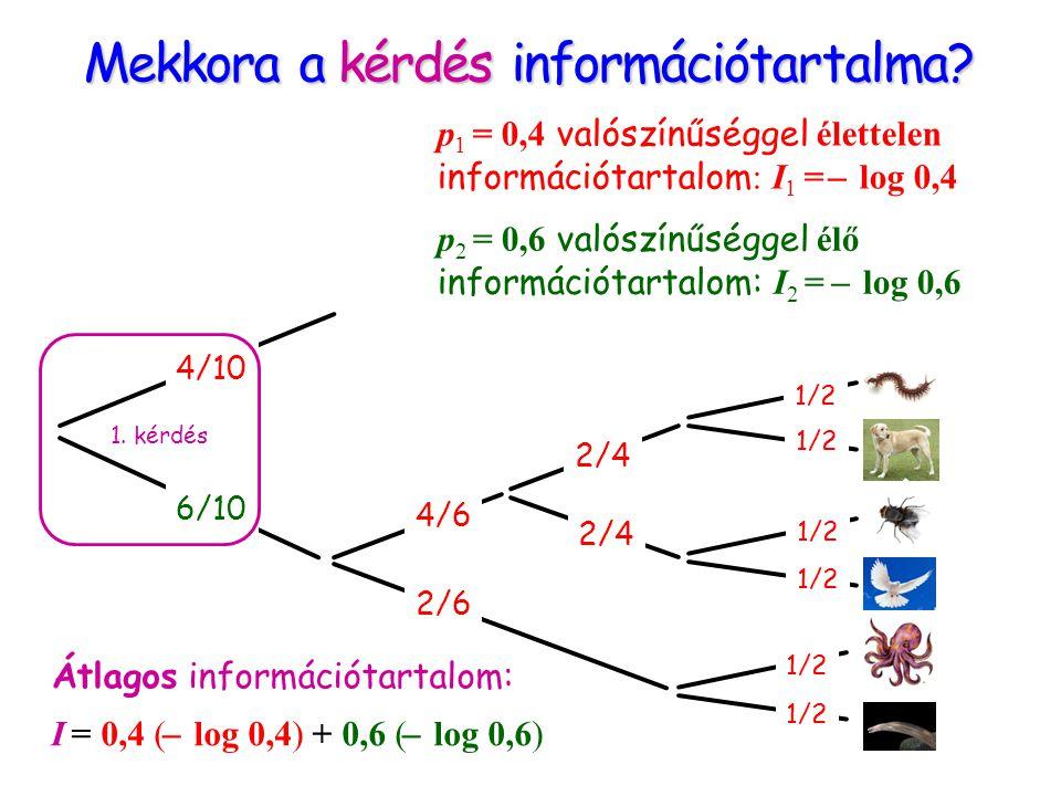 Mekkora a kérdés információtartalma? 4/10 6/10 2/6 4/6 2/4 1/2 1. kérdés p 1 = 0,4 valószínűséggel élettelen információtartalom : I 1 = ̶ log 0,4 p 2