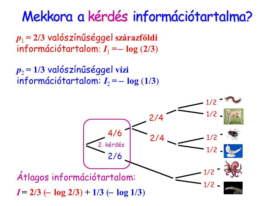 Mekkora a kérdés információtartalma? 2/6 4/6 2/4 1/2 2. kérdés p 1 = 2/3 valószínűséggel szárazföldi információtartalom : I 1 = ̶ log (2/3) p 2 = 1/3