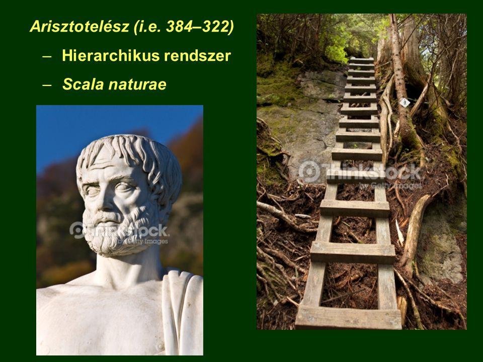 Arisztotelész (i.e. 384–322) –Hierarchikus rendszer –Scala naturae