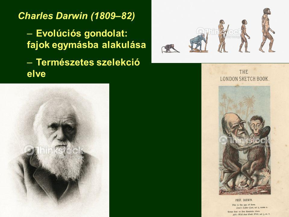 Charles Darwin (1809–82) –Evolúciós gondolat: fajok egymásba alakulása –Természetes szelekció elve