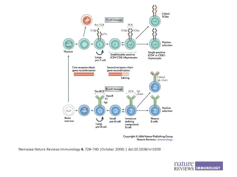 Nemazee Nature Reviews Immunology 6, 728–740 (October 2006)   doi:10.1038/nri1939