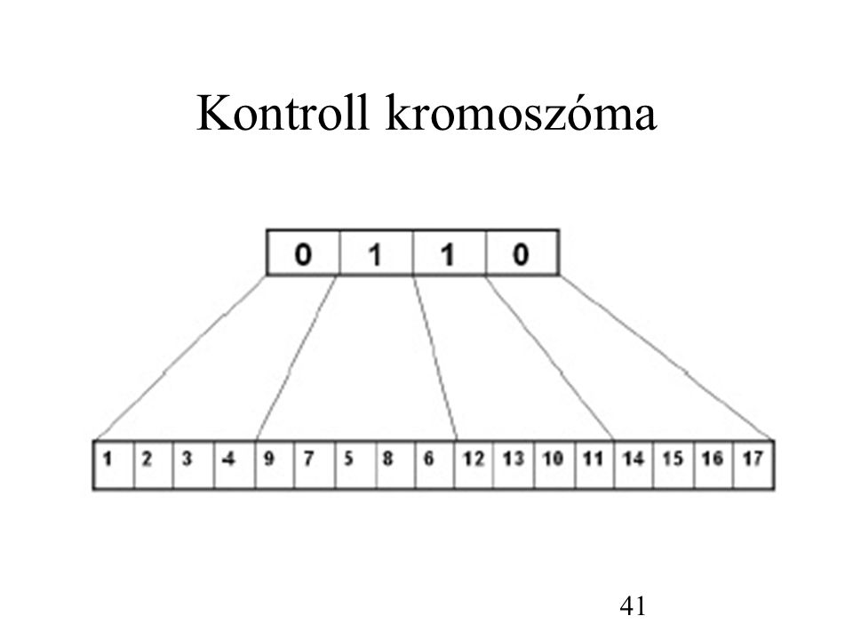 Kontroll kromoszóma 41