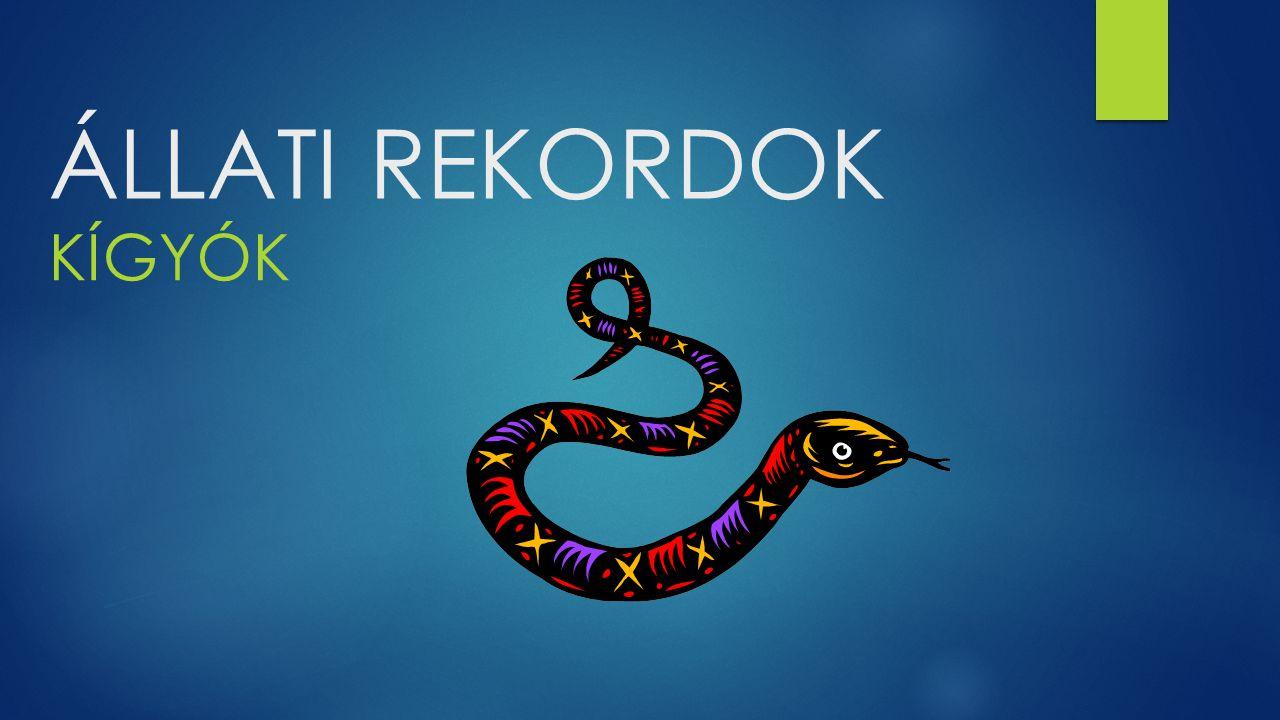 A leghosszabb mérges kígyó  A leghosszabb mérges kígyó nem más mint a királykobra.