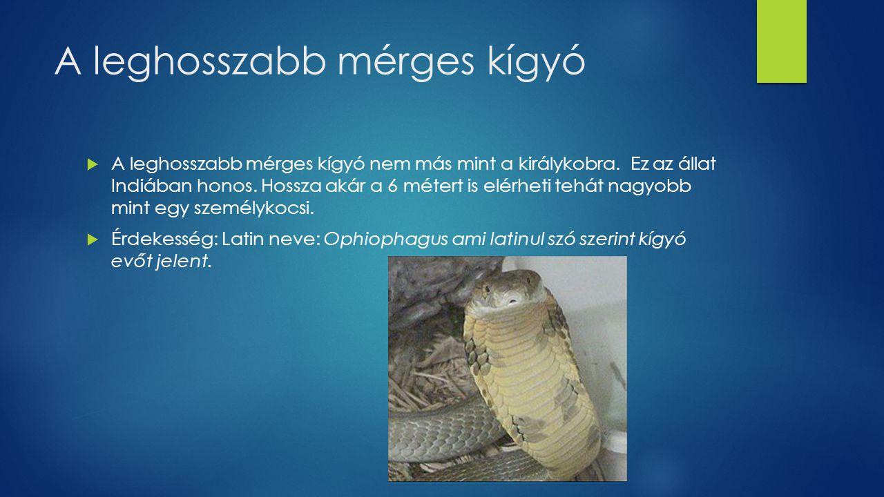 A leghosszabb mérges kígyó  A leghosszabb mérges kígyó nem más mint a királykobra. Ez az állat Indiában honos. Hossza akár a 6 métert is elérheti teh