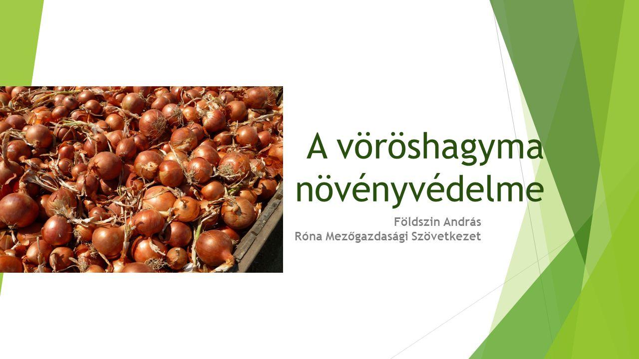 A vöröshagyma növényvédelme Földszin András Róna Mezőgazdasági Szövetkezet