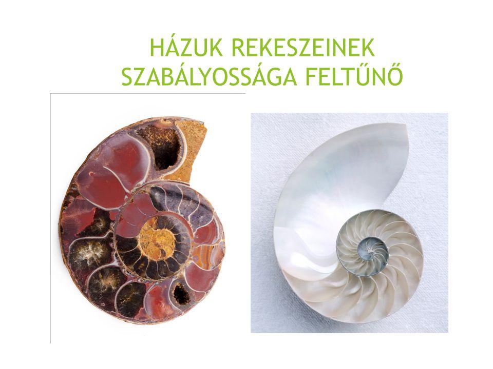 "A gerecsei ""vörösmárvány neve ammonitiko rosso"