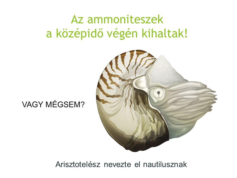 Az ammoniteszek a középidő végén kihaltak! VAGY MÉGSEM? Arisztotelész nevezte el nautilusznak