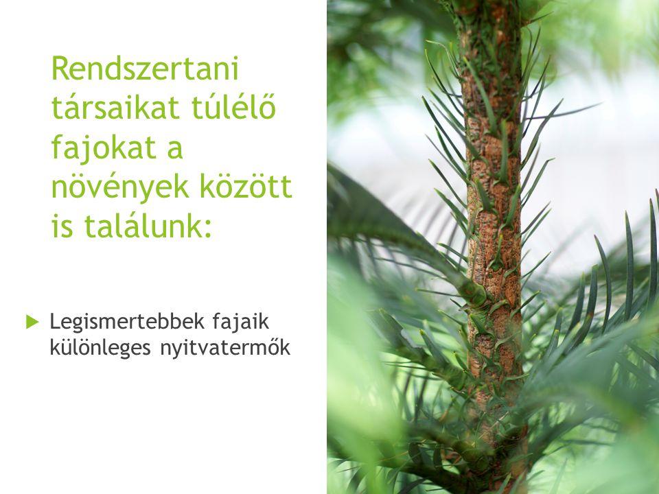A Welwitschia névadója egy Ausztriában született botanikus.