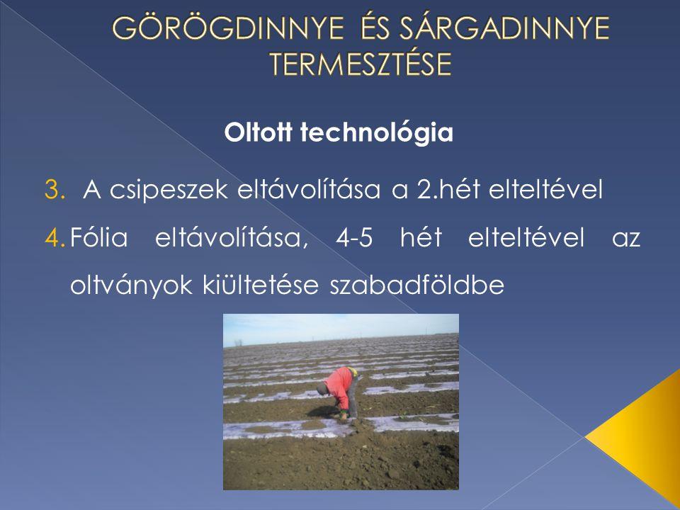 Oltott technológia 3.A csipeszek eltávolítása a 2.hét elteltével 4.Fólia eltávolítása, 4-5 hét elteltével az oltványok kiültetése szabadföldbe
