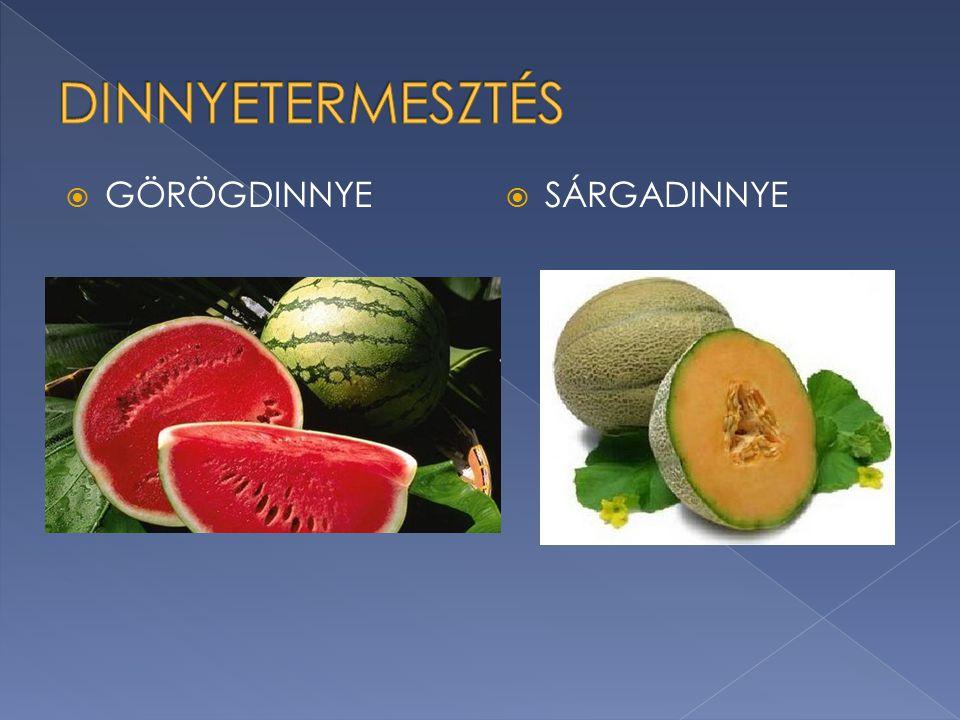  A világban 2 millió hektáron termesztenek görögdinnyét  Magyarországon 6000 hektáron  2012.